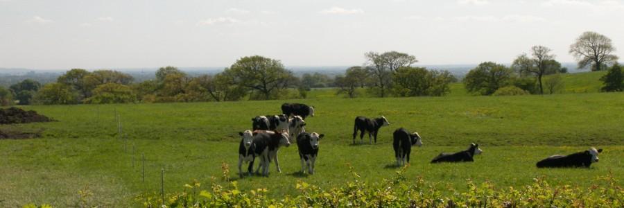 Stonyfold Farm 013